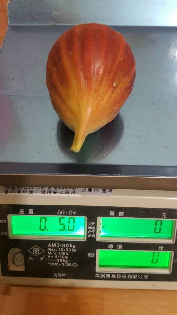 碩果甜美的果實~5两重