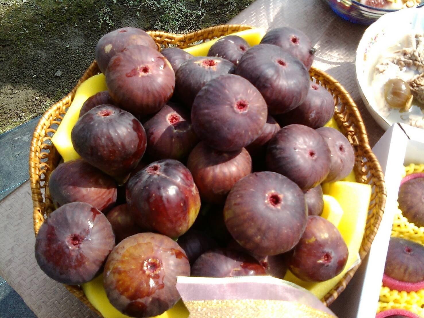 碩果甜美的果實
